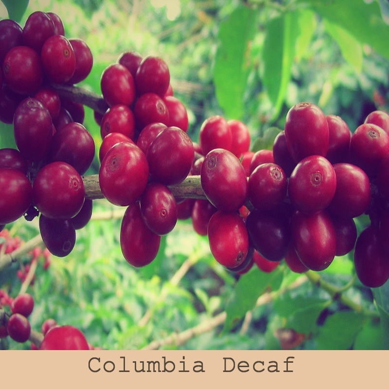 Columbia Decaf Swiss Water